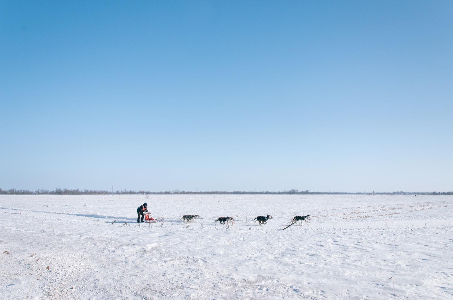 chiens de traineaux photo-1414542944327-af2efba3d04f
